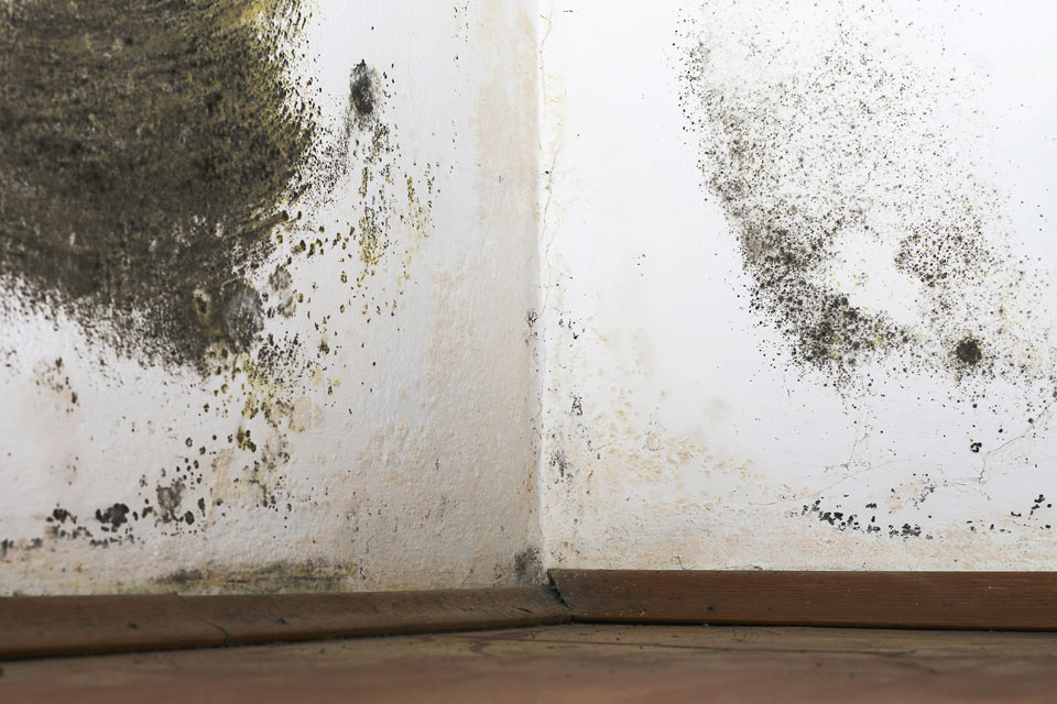 RID Damp Proofing Condensation and black mould